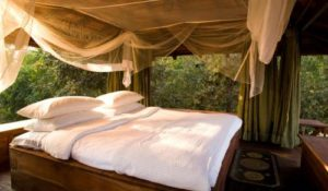 Baghvan Pench National Park – A Taj Safari Lodge